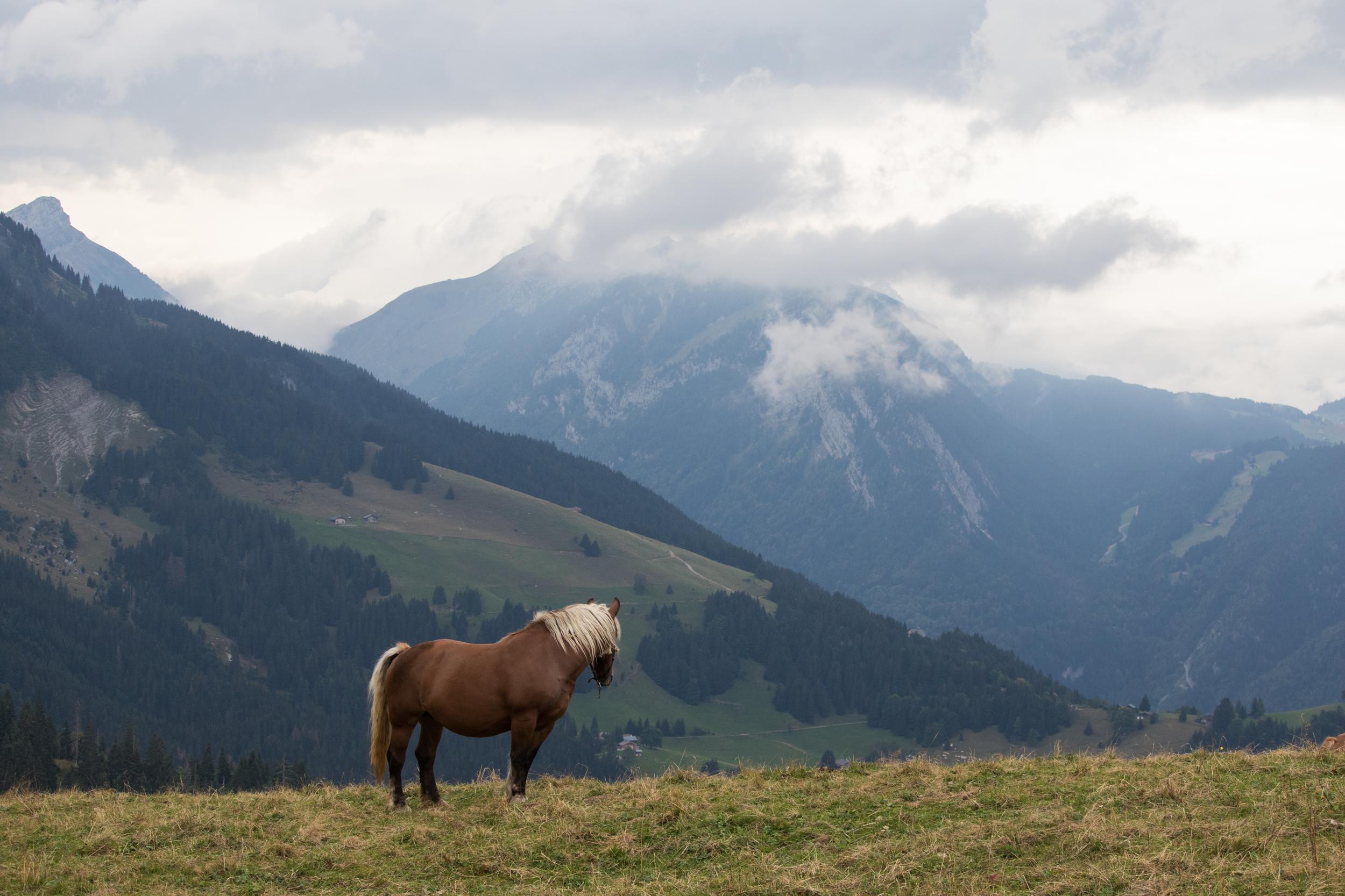 horse-lac-de-lessy-hike