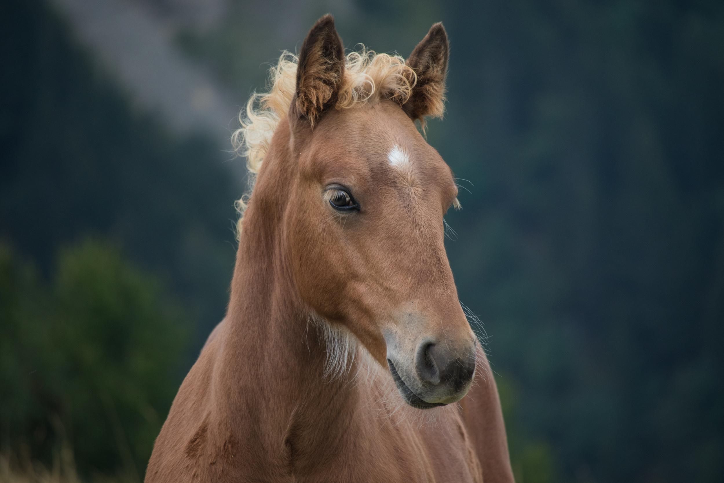 foal-lac-de-lessy-hike