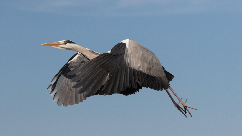 photography-class-birds-in-flight-jonathan-guillot