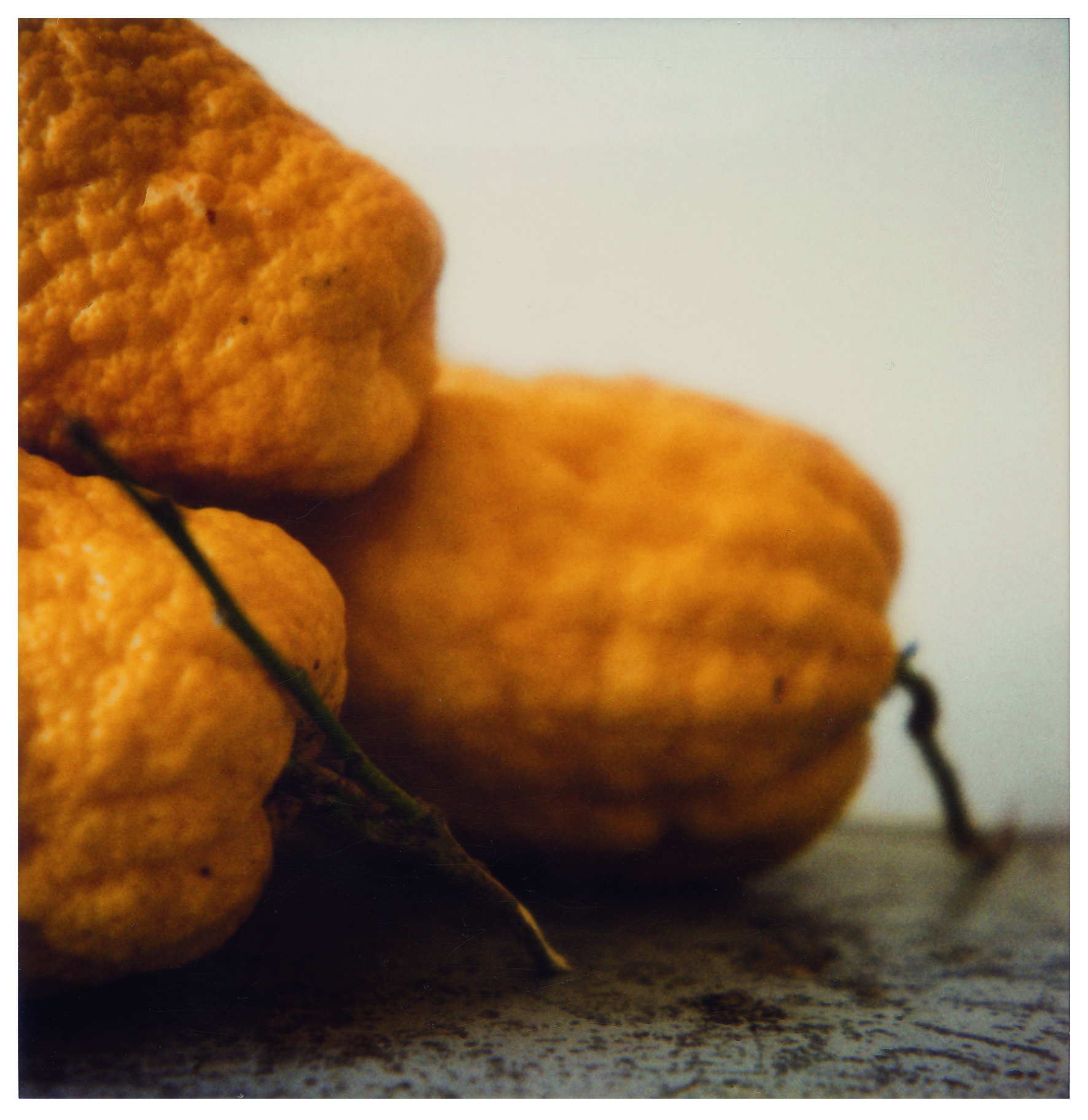 Lemons, Gaète  (1998) Cy Twombly   © Cy Twombly Foundation, courtesy Archives Nicola Del Roscio