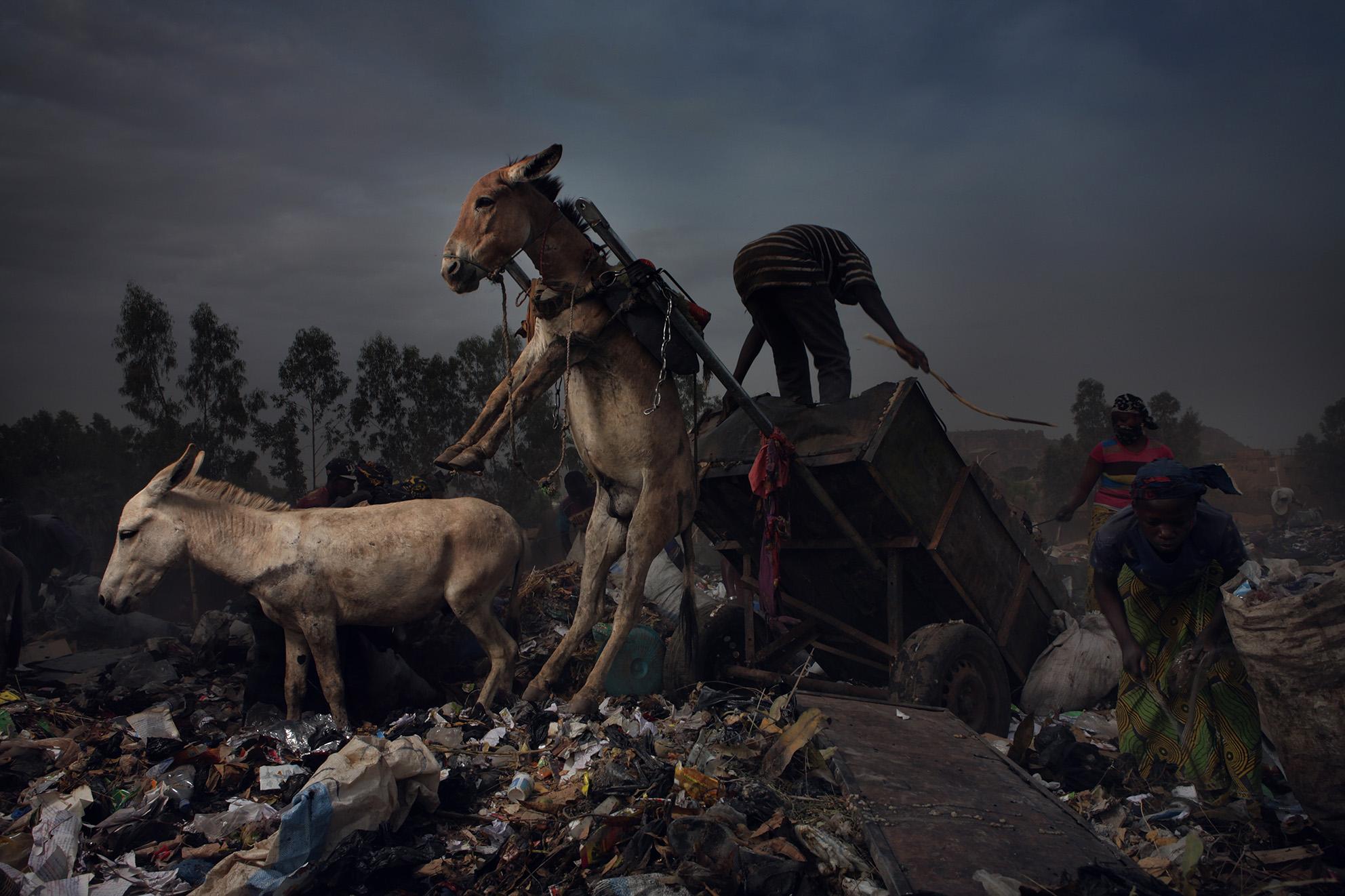 Wahib Chehata,  Les ânes , 2019, 160 x 240 cm, tirage sur papier Baryté  © Wahib Chehata, Courtoisie A2Z Gallery