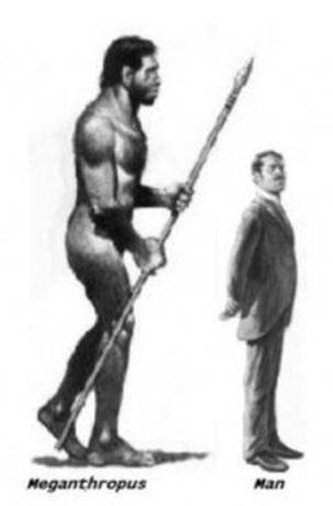 Meganthropus  vs. modern man
