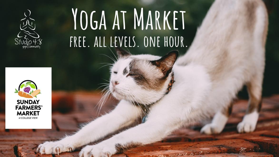 Yoga at Market cat.png