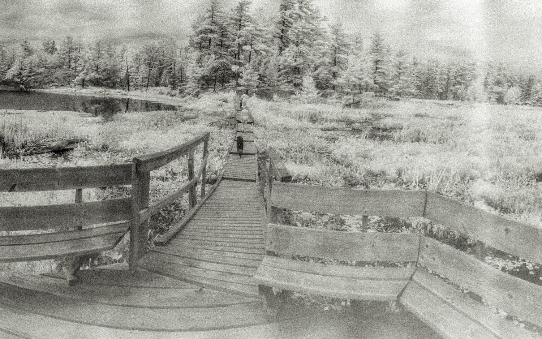 Platform at the centre of a bog - detail