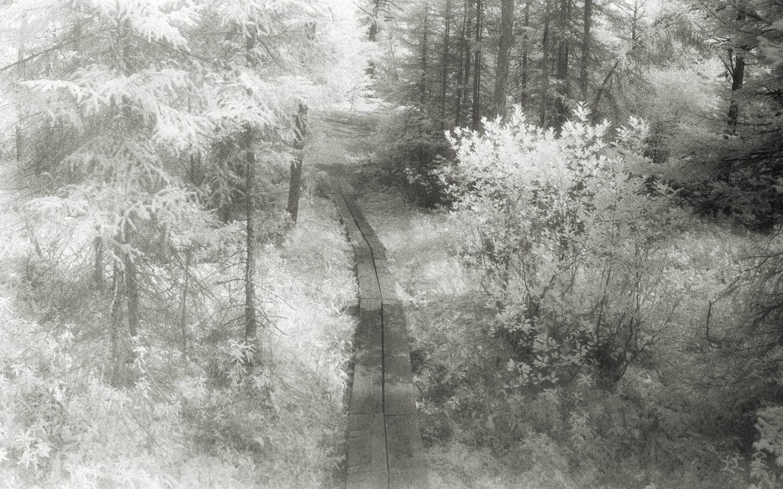 Plank trail - detail
