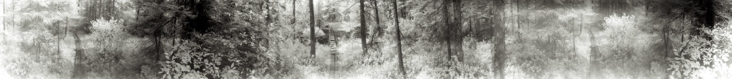 Plank trail