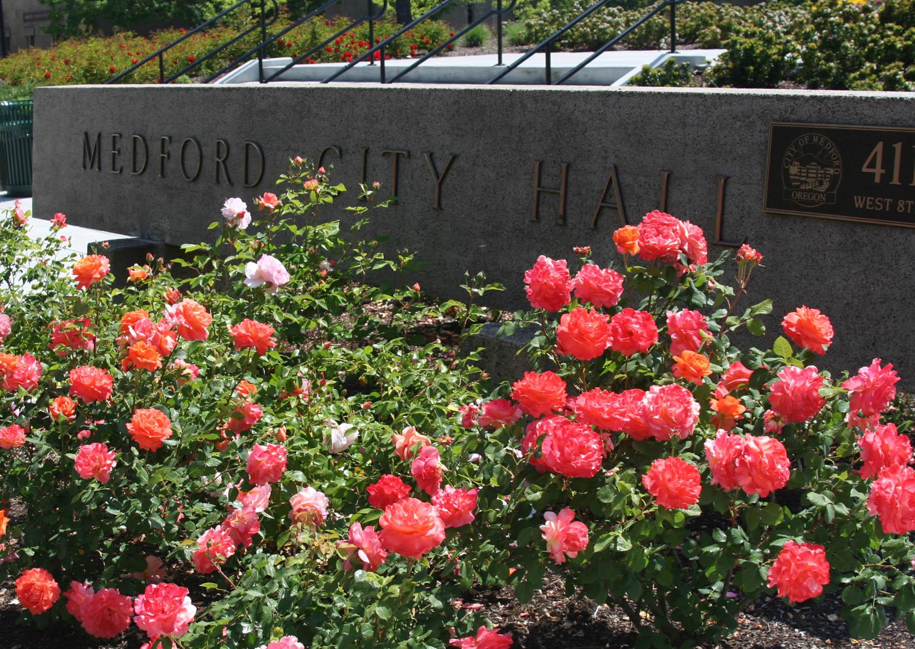 City Hall Roses_web.jpg