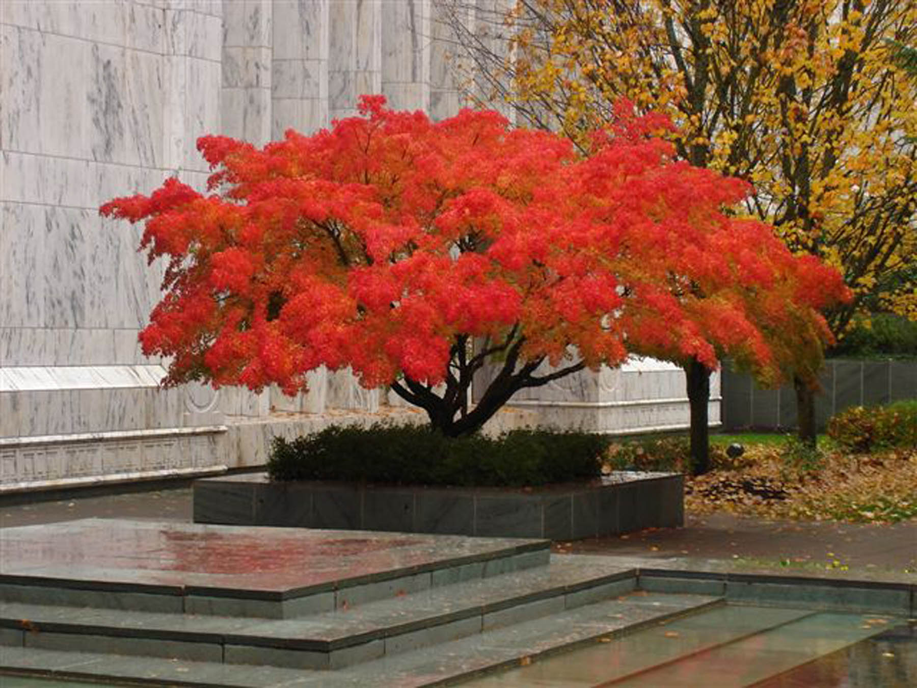 Temple acer_web.jpg