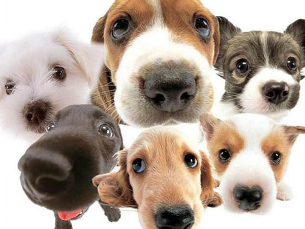 About Canine Cancer