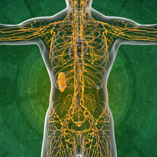 Image of nervous system
