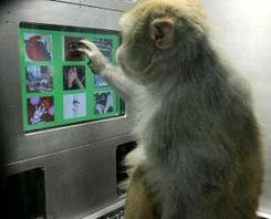 monkey playing with computer metacognition image.jpg