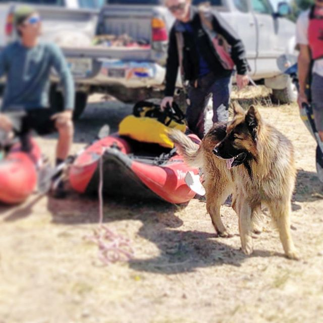 Smokey's goin' boatin' on the Teton! Good times! #boatingwithdogs #rafting