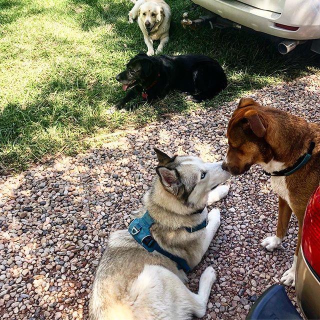 Quadruple threat. And nose kisses. #dogfriends #Hankin2020
