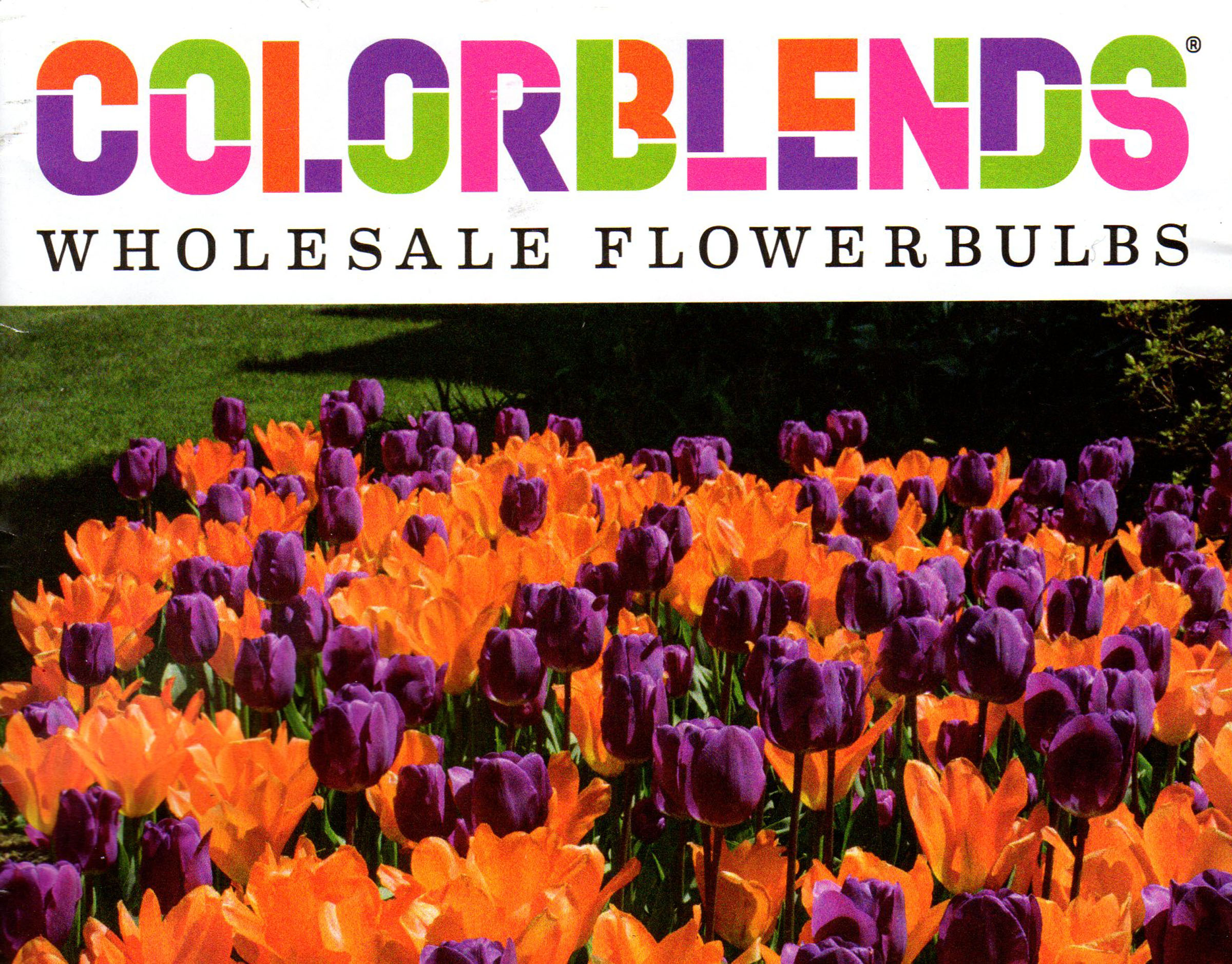 The cover of Colorblends's 2017 catalog