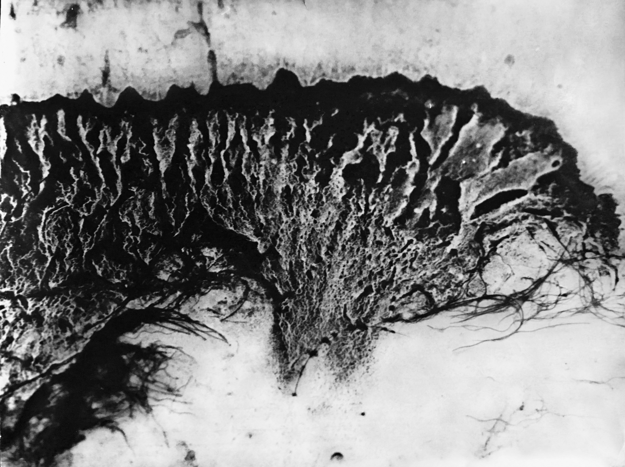 1000 Washes & A Slow Drain (Relief From My Dog)  (gelatin silver print)