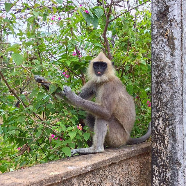 Cheeky little guy 🐒 stealing berries off our neighbors tree