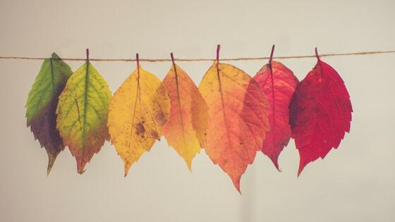 make your room a comfy cozy fall haven colors