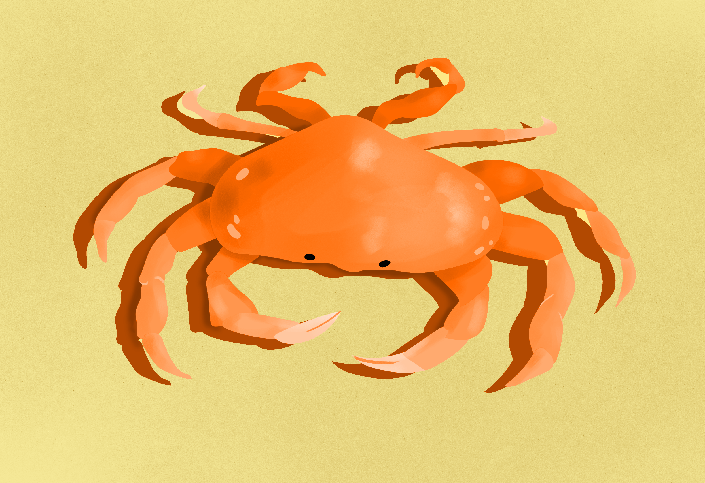 Mr Crab on a scorching hot beach