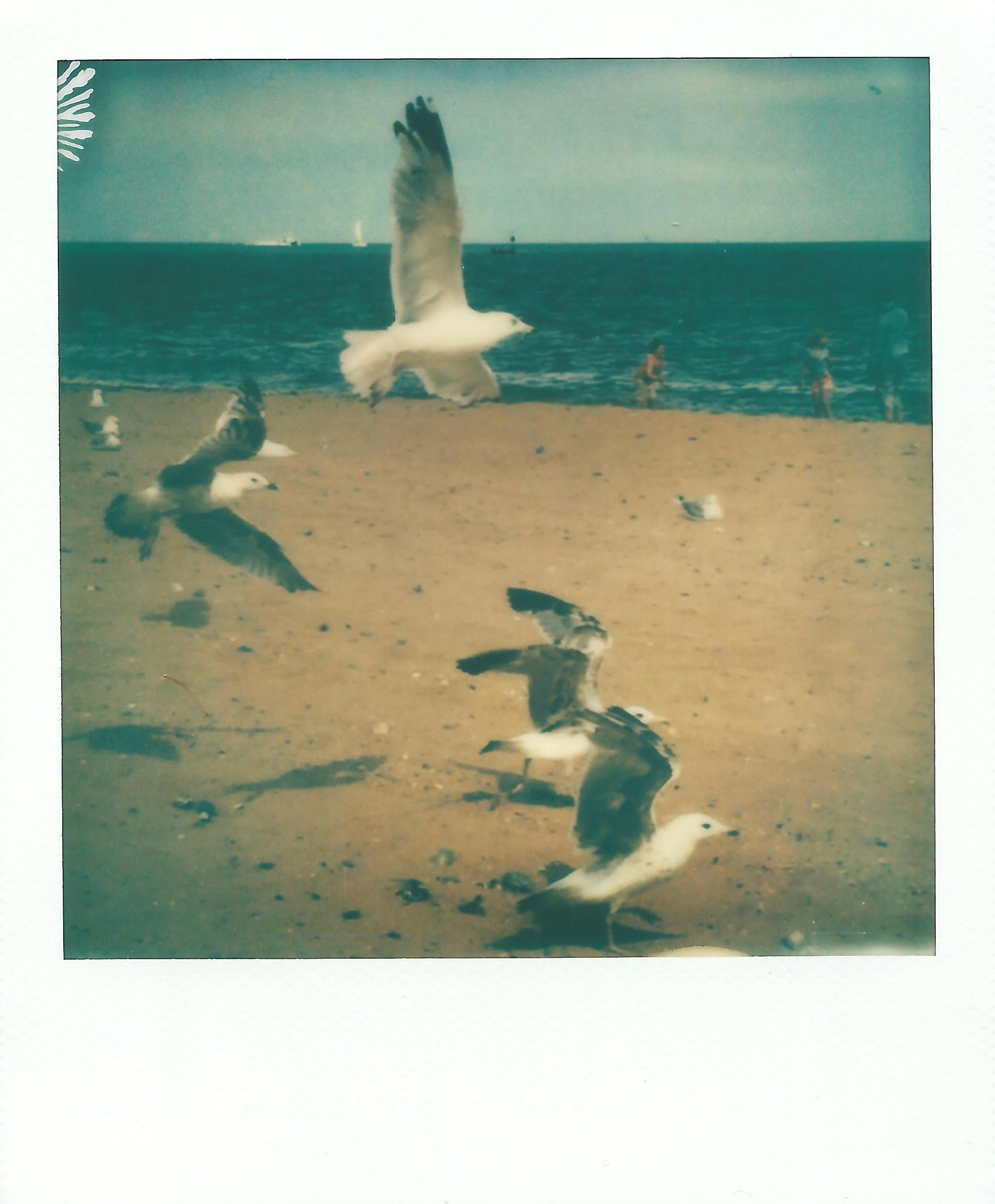 seagulls_ramsgate.jpg