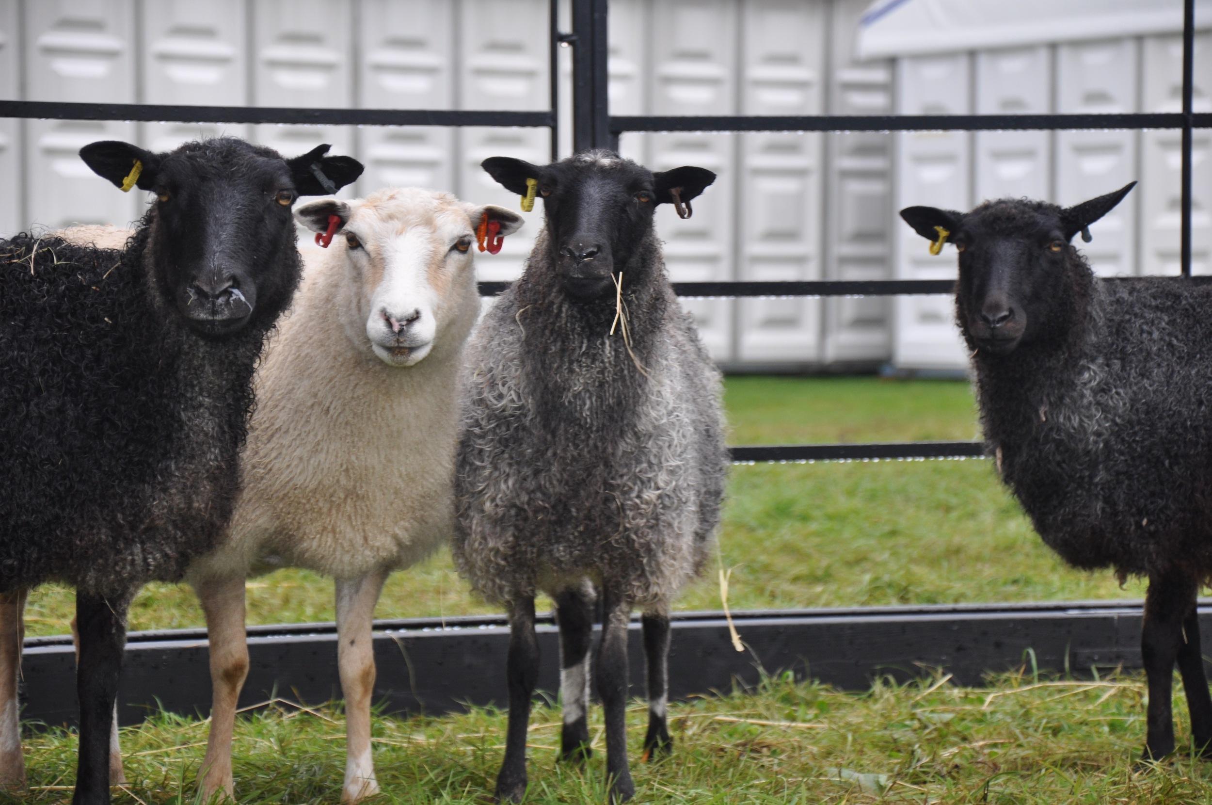 Little Grey Sheep at Decorex