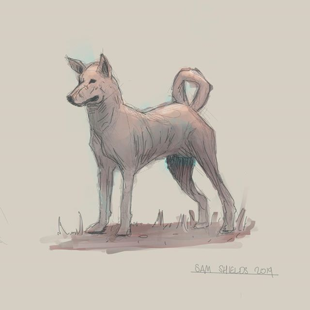 Pariah dog  #drawing #draws #sketch #art #illustration #sketch #perth #perthartist #dog #pariahdog #lowbrowart #juxsketch