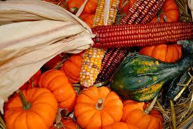 indian corn.jpg