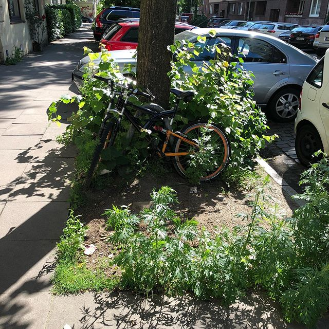 Fahrrad geklaut. Viel Spaß mit dem gebrochenen Rahmen. Danke, jetzt muss ich mich nicht um die Entsorgung kümmern.