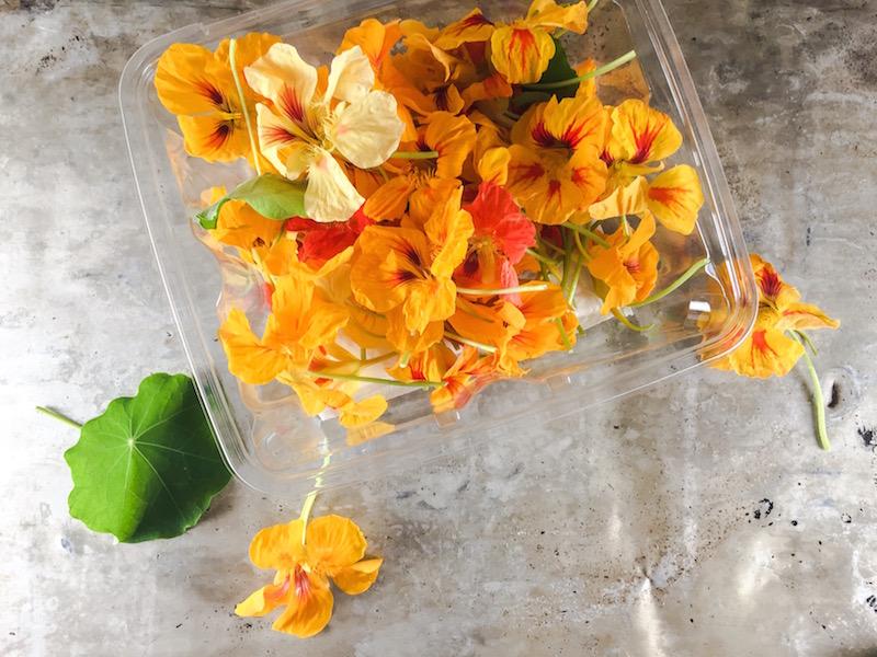 Sid Wainer Nasturium Blossoms