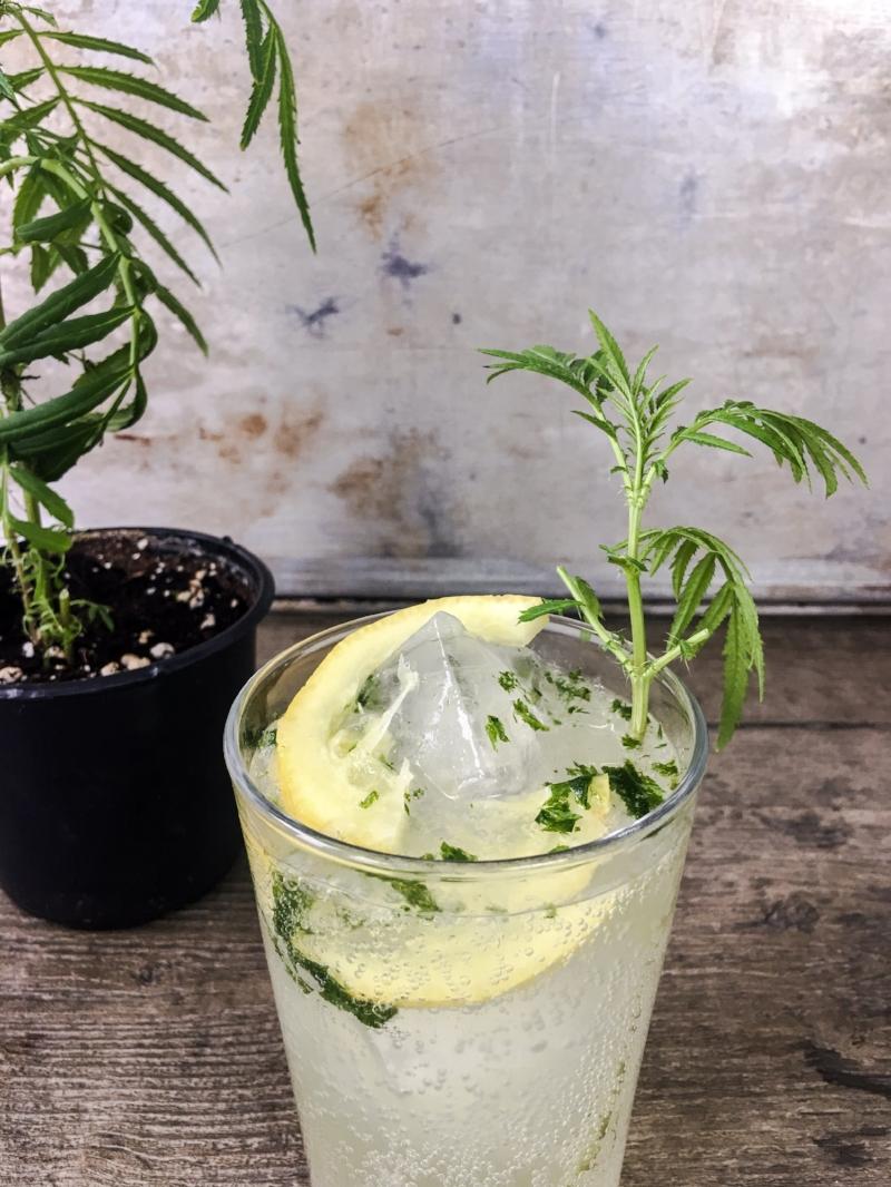 Peruvian Mountain Mint and Fresh Citrus 1.JPEG