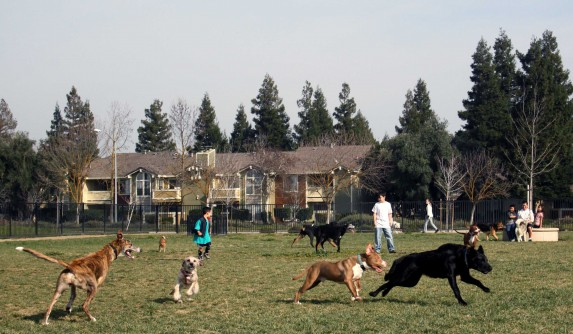 Merced Dog Park -  PHOTO BY ADAM BLAUERT