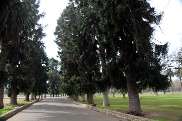 Kearny Park Tree-Lined Boulevard - PHOTO BY ADAM BLAUERT