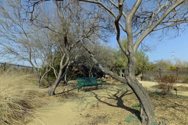 Desert Willows - PHOTO BY ADAM BLAUERT