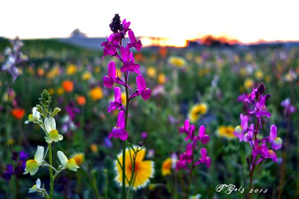 Wildflowers 14