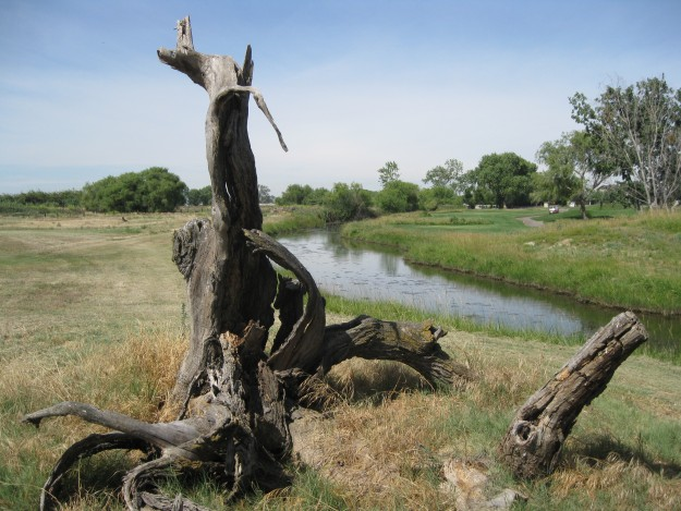 Stump between 10 and 11 at Stevinson Ranch Golf Club.  Photo by Steve Newvine