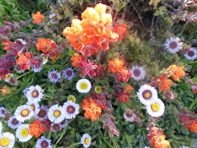 Merced-County-Events-Point-Lobos16.jpg