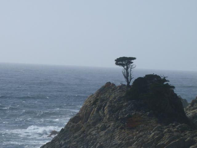 Merced-County-Events-Point-Lobos23.jpg