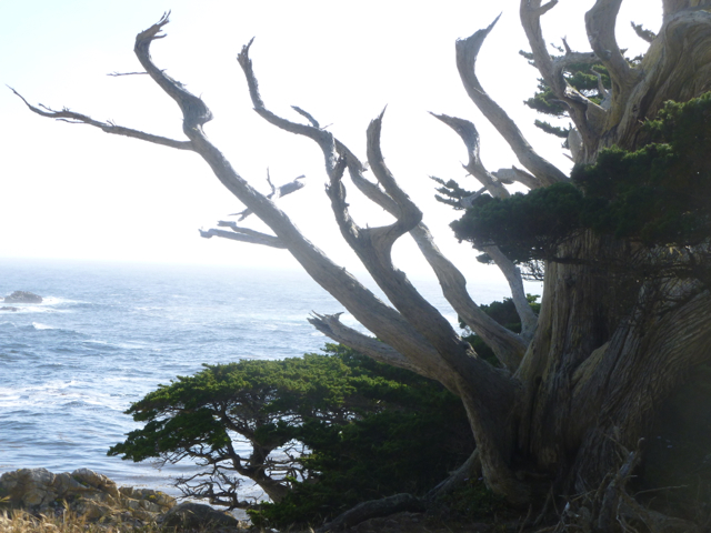 Merced-County-Events-Point-Lobos25.jpg