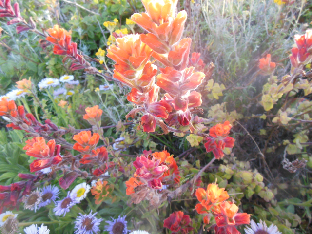 Merced-County-Events-Point-Lobos19.jpg