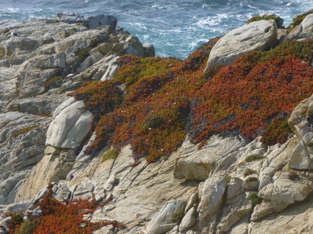 Merced-County-Events-Point-Lobos28.jpg