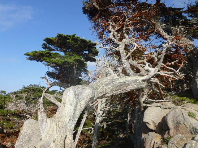 Merced-County-Events-Point-Lobos29.jpg