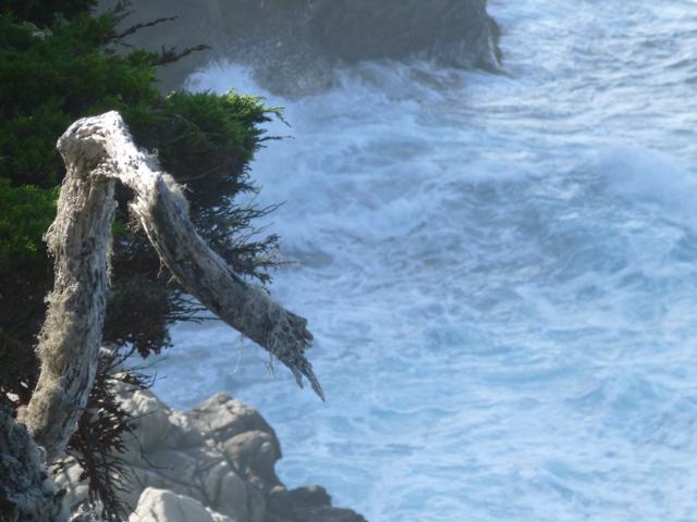 Merced-County-Events-Point-Lobos33.jpg