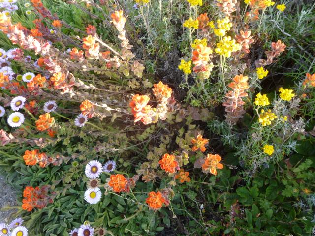 Merced-County-Events-Point-Lobos40.jpg