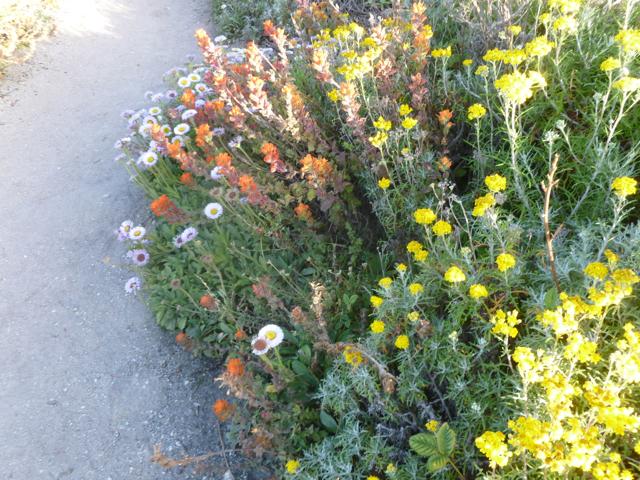Merced-County-Events-Point-Lobos41.jpg