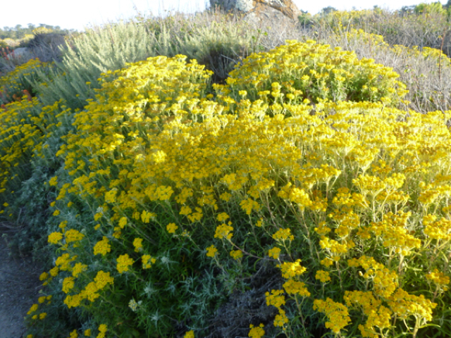 Merced-County-Events-Point-Lobos42.jpg