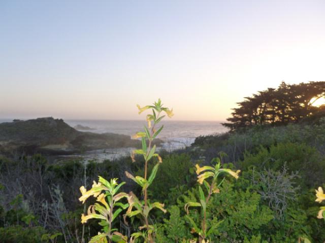 Merced-County-Events-Point-Lobos44.jpg