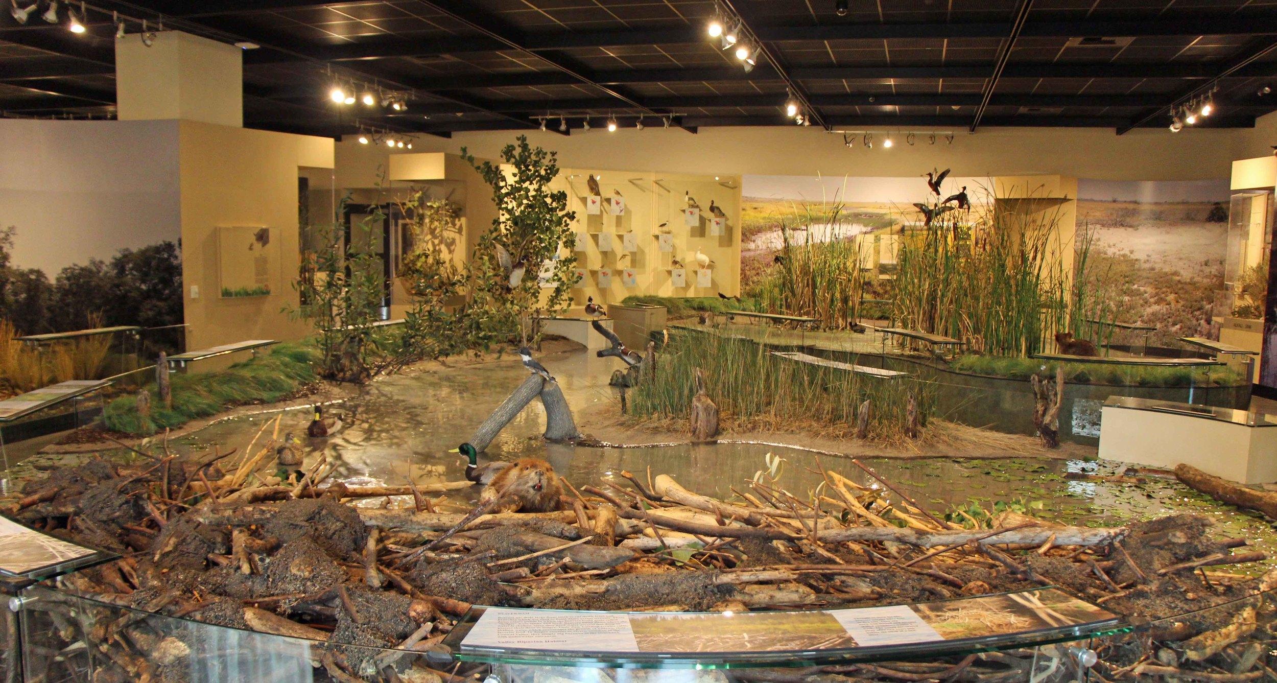 Wetlands Display.JPG