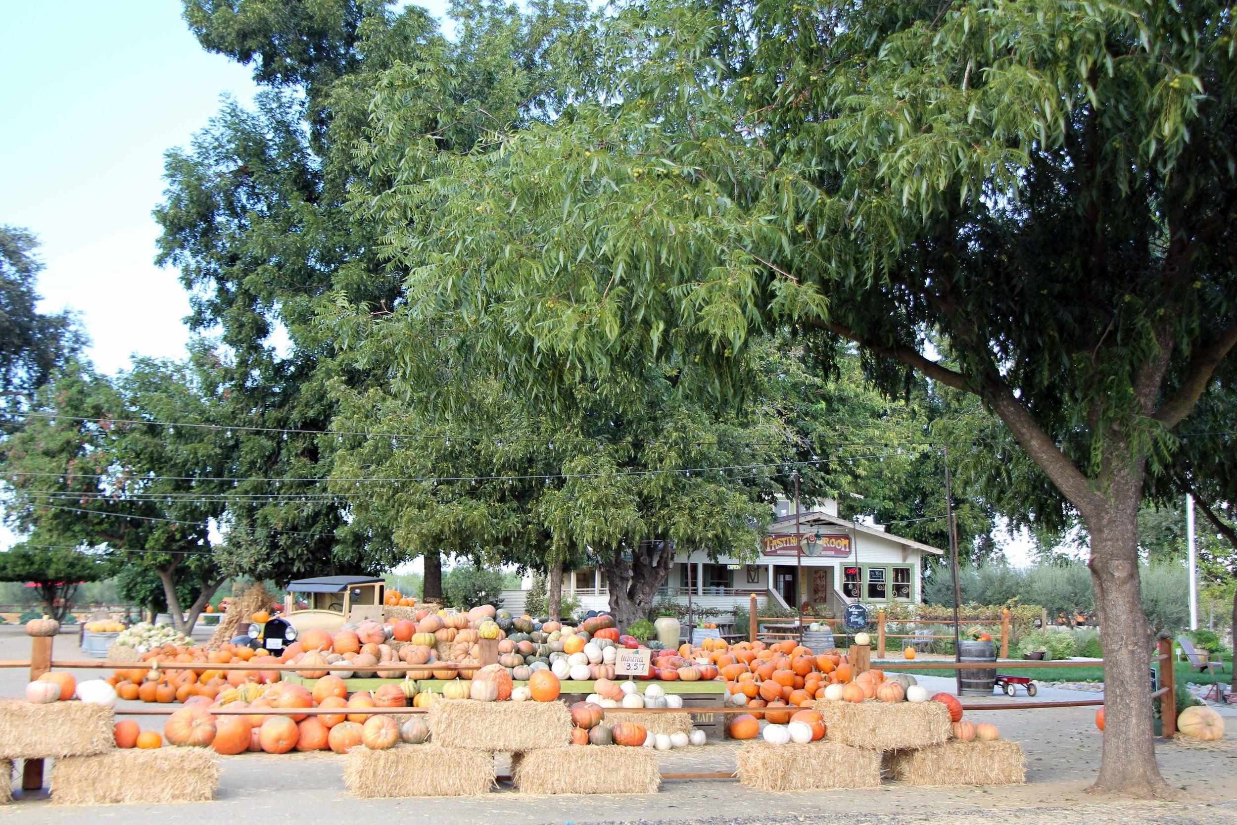 Vista - Bear Creek Pumpkin Patch 1.JPG