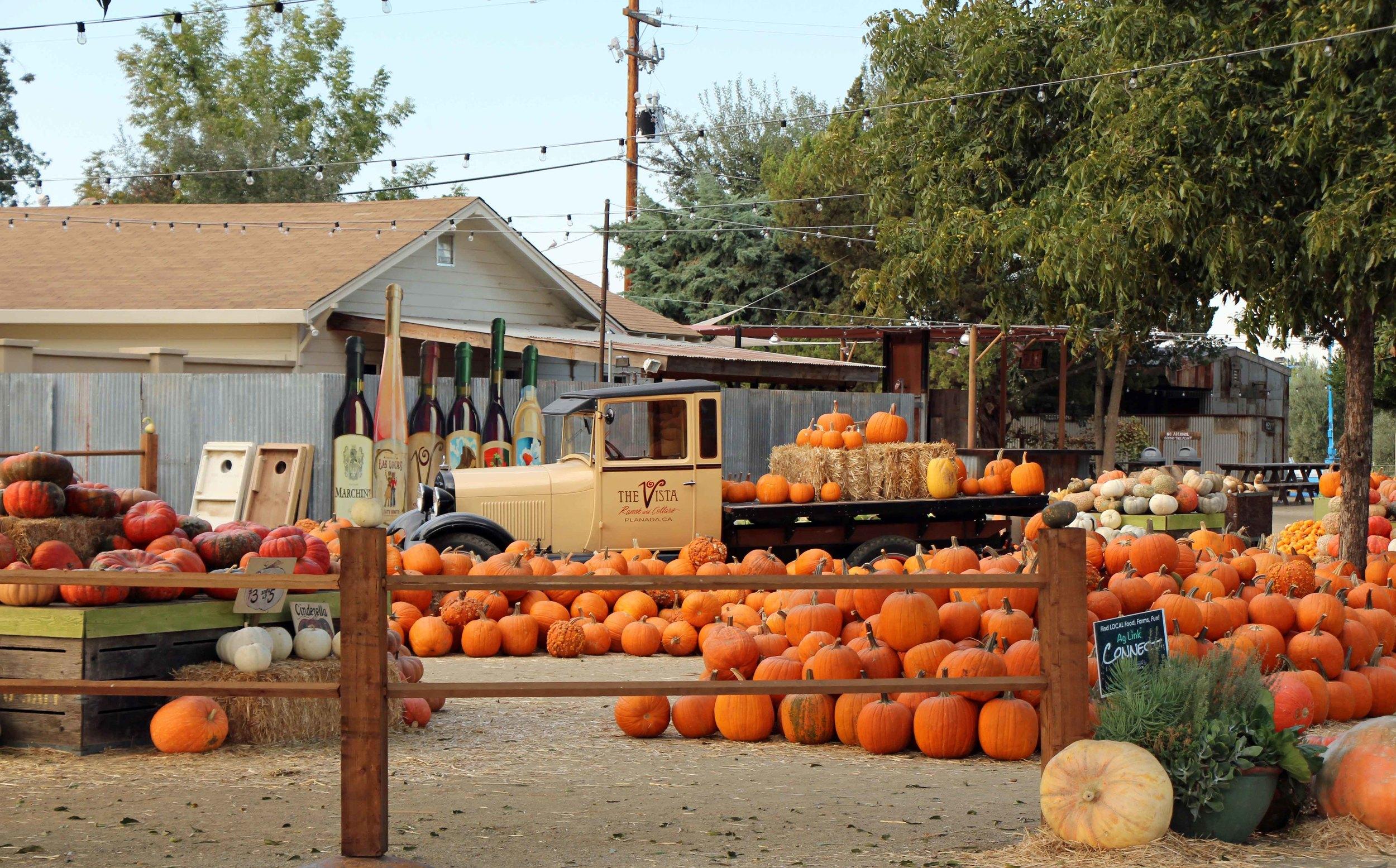 Vista - Bear Creek Pumpkin Patch 2.JPG