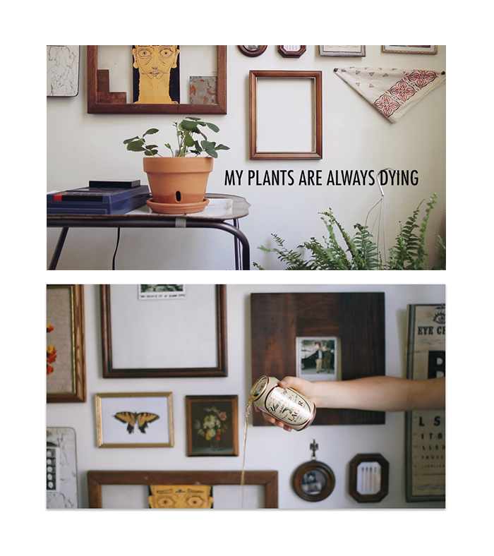 stills from a recent video project,  My Plants Are Always Dying  (2013)