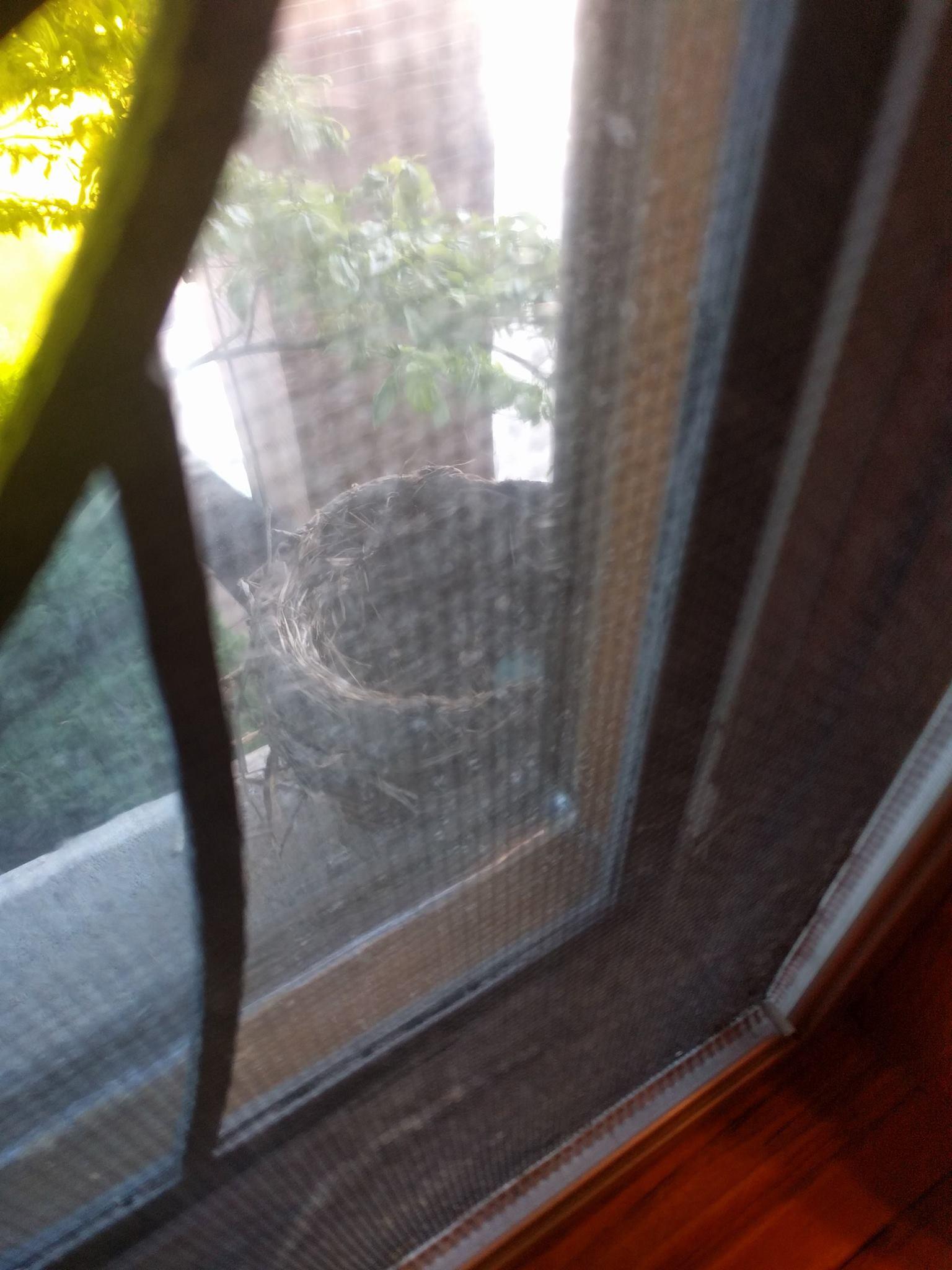 Bird Nest.jpg